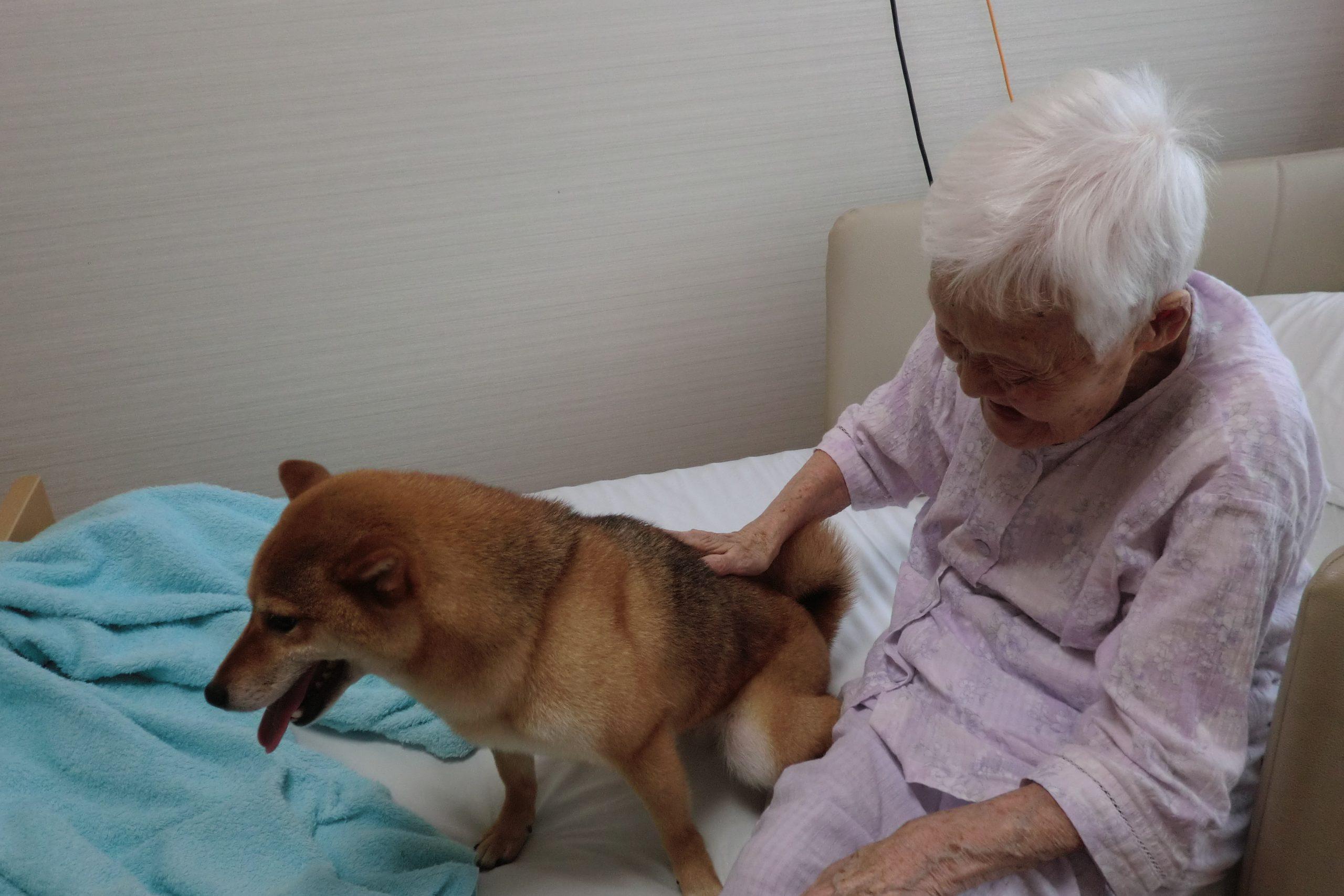 Dog therapies